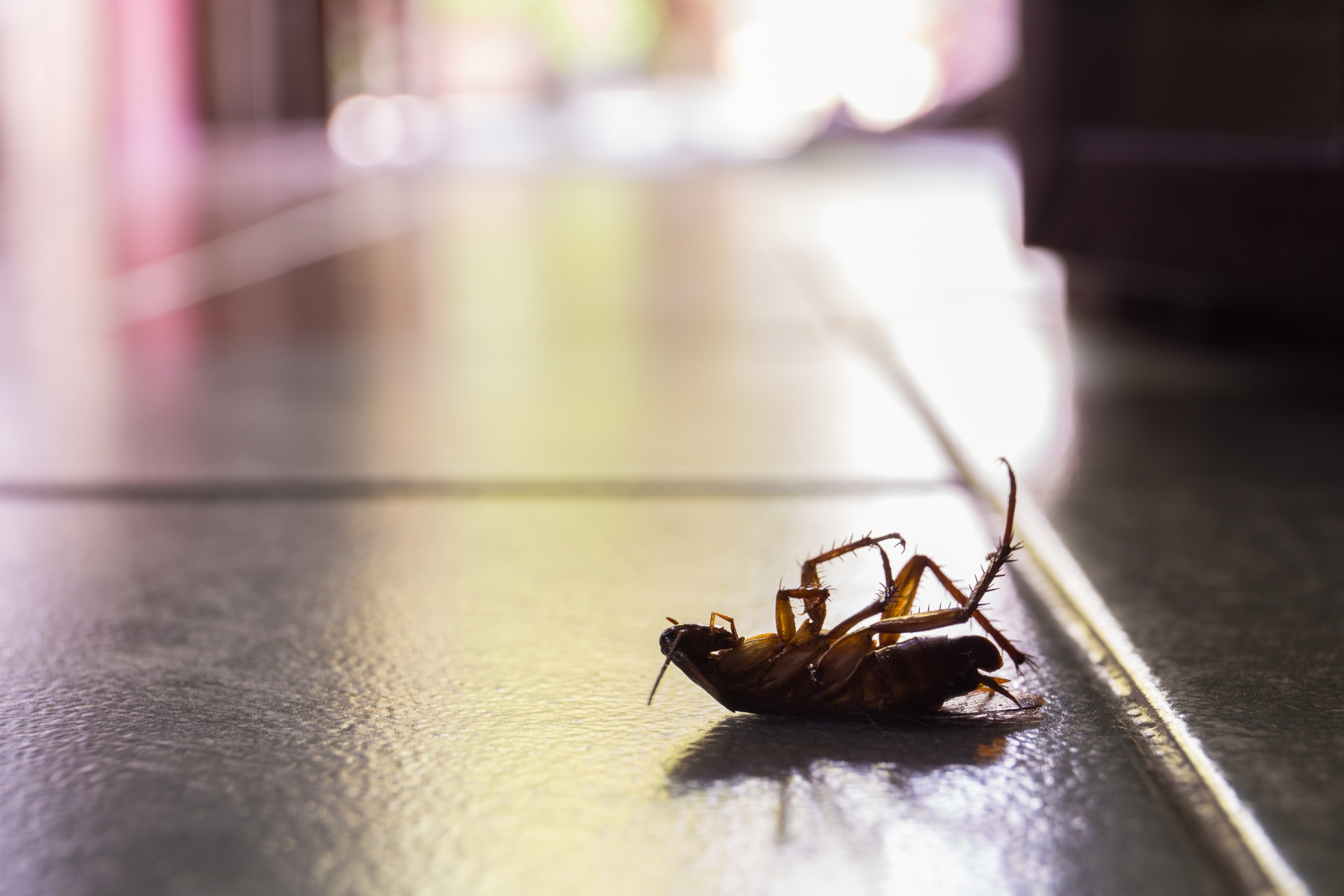 Cockroach Control, Pest Control in Wembley, Alperton, Sudbury, HA0. Call Now 020 8166 9746